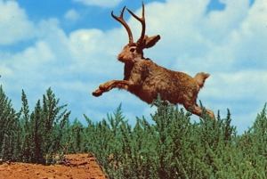 "No way this isn't photoshopped or have any taxidermy involved, said no one ever. Seriously, jakalopes don't exist. Those hares with ""antlers"" were later found with a fungal infection. Or were perhaps glued. Still, it's a fine example of Western humor in taxidermy."