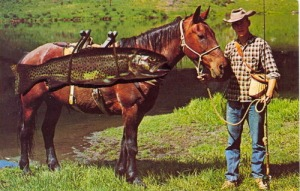 Of course, horses can only be good for carrying medium sized fish hauls. With large sharks, you're going to need a car.