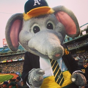 Now he may appear as a reasonably intimidating elephant on the Oakland A's logo. Yet, he practically seems more suited for a kid's program in person and that's no small peanuts here.