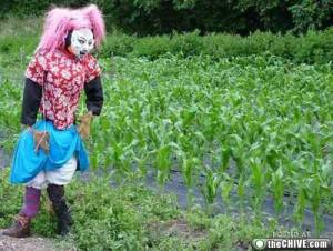 Actually, this would make a good scarecrow of Lady Gaga. Still, this will certainly scare crows if you know what I mean.