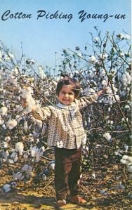 Of course, we have to understand that cotton picking is not fun and it can result in a lot of cuts and scrapes if you do it long enough. Otherwise, Southerners wouldn't have made slaves do it (and we fought a whole war over slavery). Not only that, but cotton is now picked by machinery.