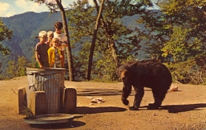 I bet any money that the bear is either going for whatever's in the trash can or to the kids watching it. Then again, there's the person taking the picture.
