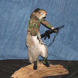 Now this must be the cutest little US Army Green Beret I've ever seen. Of course, you wouldn't want to touch his acorns.