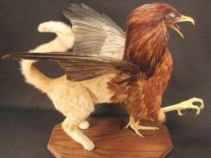 Yes, there are specimens that fit in the category of rogue taxidermy. Now this griffin was created from a house cat and a bird of prey, but it's still rather realistic looking. Of course, in mythology, griffins are much bigger.