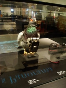 Before we had more advanced technology, the NSA used to send spy pigeons all around the country to monitor suspected terrorists. Of course, in practice, these pigeons didn't always live up to the government standard and sometimes spied on normal Americans instead.