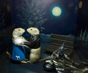 Of course, though this may seem like a 1950s nostalgia scene, notice that the male gopher isn't wearing any pants or a helmet.