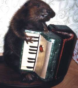 Then again, he probably did a performance of a polka at the Lawrence Welt Show back in the day. I'm sure a lot of young beavers were forced to watch it.
