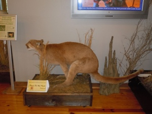 Now I wonder if the taxidermist wanted to show movement but somehow ended putting the cougar in a shitting position instead. Still, it's pretty damn funny and will probably get a lot of museum visitors.