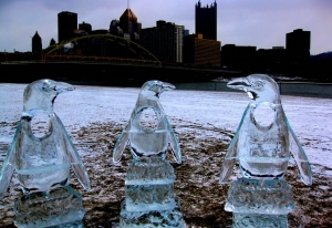 Yes, these are penguins, and yes, they are in Pittsburgh. Got any problem with that. Still, adorable.