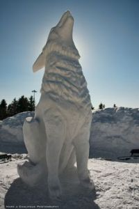Then again, this sculpture certainly looks like a wolf down to its very detail. I wonder how that's even possible.