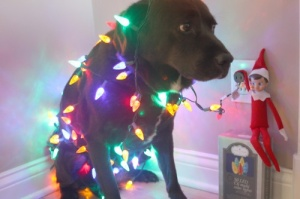 However, I'm not sure decorating the dog with Christmas lights is what the Griswolds have in mind. Also, it seems like Jake might be in fear of getting electrocuted. Yet, I'm not sure if he could sit still.