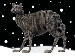 Iceland has a Yule Cat who's not very nice and is said to devour lazy children without clothes for Christmas. You can see why Icelanders work so hard.