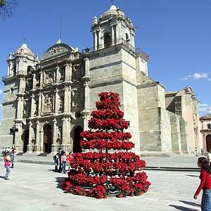 Mexico is also the native range of the Poinsettia which is the standard flower for Christmas. This became incorporated in the US traditions around the time of the Mexican War.