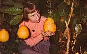 Rather I think she wants to use that mango to drop on her little brother's skull since he stole her Fruit Roll Ups. Little Stevie needs to pay.