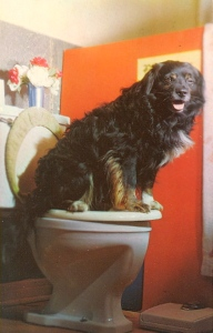 I bet that any dog owner would rather teach their dog to go on the toilet than have it drink from there. I wonder if this potty animal knows how to flush.