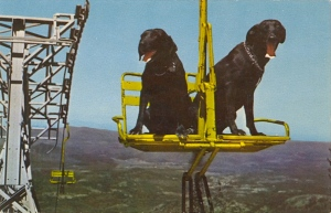 Now that just can't be safe for animals. Seriously, I wonder if either of these dogs would have the patience of staying on these seats. Besides, what if one of them jumps?