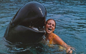 This is probably a false killer whale which is also used in aquariums and kept in captivity. However, unlike the Orca, there are no campaigns concerning the captivity of these creatures since they're not studied as much and have a population that's much more endangered. This may especially true in Hawaii where they're most frequently seen.