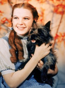 "Judy Garland is best remembered for her role as Dorothy from The Wizard of Oz as well as singing, ""Over the Rainbow."" Yet, despite her iconic status and success, her private life was hell with drug addiction, studio pressures, failed marriages, and financial difficulties later in life."