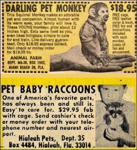 Okay, now there's a reason why we don't have pet monkeys and raccoons. For one, many monkeys are endangered and having exotic pets aren't encouraged. Also, monkeys don't like lollipops. Second, raccoons make terrible pets and many carry rabies.