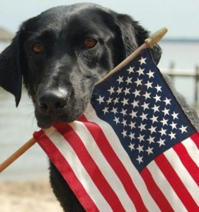 Okay, now I know Americans love their pets and like to use them in patriotic photo ops. However, it's best you don't put an American flag where it can incur soiling and damage such as in a dog's mouth.