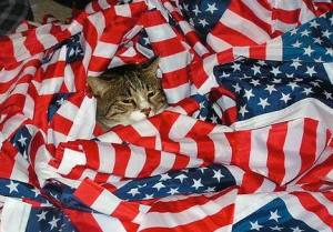 Look, I understand you want a picture of your cat for Facebook patriotic kitten photo contest. But still, American flags shouldn't be on the ground nor be placed in a jumbled up mess.