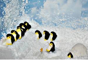 Of course, we all know that penguins don't live in igloos or use fishing rods. Those props were just for giggles.
