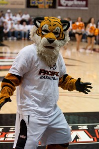 "Or as I call him, ""Soulless Eyes Cat Willing to Devour You."" Seriously, this tiger gives me the creeps as if he sees a coed as a potential meal or a virgin sacrifice."