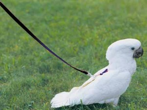 Now your feathered friend can enjoy the great outdoors without flying away with this bird harness. If your bird needs exercise, why don't you just let it fly around the house (with the doors closed of course)?
