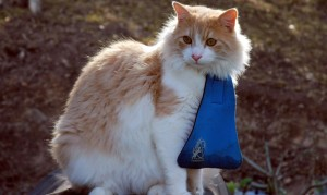 This is supposed to keep your cat from hunting birds. Effective? I wouldn't bet on it. Humiliating? I'll say.