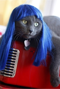 Now I'm sure Kitty here really isn't appreciating this photo op. Seriously, pets aren't dolls, people! Would you want someone to put a funky wig on you? Of course, not!
