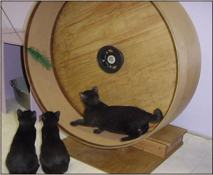 It's like a hamster wheel, except that it's huge and serves no real purpose. Seriously, it's said you have to distract your cat with a cat toy to get it in this thing. Yeah, $100 isn't worth it.