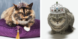 Yes, you want Precious Purfect to look like a princess. But please, put one of these on her, and you'll probably have to sleep with one eye open if it ever stays on. Might be useful for a cat beauty pageant, if one ever exists.