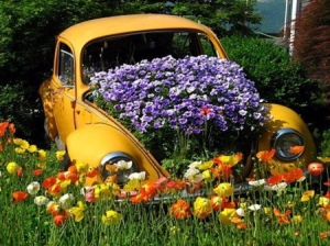 Seems like that old Volkswagen Beetle now has a new life as a flower planter. Of course, I wonder if neighbors still see it as a piece of junk.