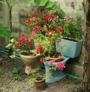 Hey, I'm sure toilets might make okay planters. I mean they're made from porcelain and have several open containers to them. And in some situations, I'm sure they'll benefit from some organic fertilizer.