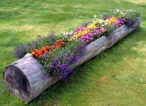 Now I think there's a log like this in my yard. Wonder if I should ask my dad to hollow it out so my mom can plant flowers in it. Of course, he'd probably refuse.