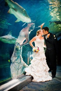 I think the two of them found the perfectly wrong place to kiss for a wedding picture. Really, near the shark tank? That's not romantic.