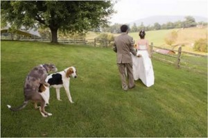 Yes, two dogs humping each other can really ruin an idyllic, fairy tale wedding photo. And they really don't give a shit if you have to see it. Really, they have no conception of privacy.