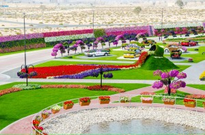 This is part of the Miracle Garden in Dubai which is one of the largest public gardens in the world as well perhaps runs among the world's highest water bills. You'll see a lot of scenes from this place since it's like a garden theme park.