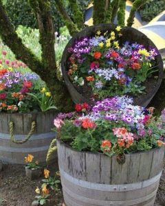 Of course, you can buy these large wooden buckets at any hardware or department store like Wal Mart or K Mart. Nevertheless, these flowers are quite beautiful in them.