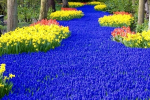 Now this garden only consists of daffodils, tulips, and violets. Still, a rather beautiful sight if you think about it.