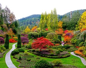 Now this is from a botanical garden in Canada, possibly in the Pacific Northwest. This picture was probably taken during the early spring but it's quite a stunning sight.
