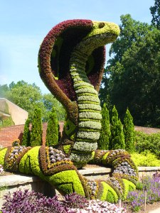 This is a flower sculpture of a cobra at a botanical garden in Atlanta. Nevertheless, while snakes are best avoided, they tend to be a necessary evil when it comes to gardening, especially when it comes to vegetables. Seriously, they eat the critters who would munch on your peonies any day of the week.
