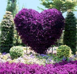 Of course, this is probably in a botanical garden and erected from the ground. But it's nonetheless beautiful, especially since it's purple.