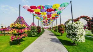 Again, this is in the Miracle Garden in Dubai where the water bills are sky high. Still, it's amazing how they got the umbrellas to stand like that.