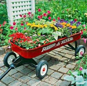 Now I'm not sure whether the red wagon should be used for this. Nevertheless, the flowers are quite pretty to say the least.