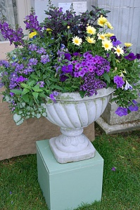 Now I've seen this in a lot of gardens and you can get it in a store. But these flowers sure are pretty though.