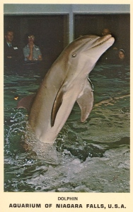 Yes, Bucky wasn't the kind of friendly dolphin at the aquarium and didn't care for people much. Well, unless he was allowed to murder and eat them. Still, that is the most evil looking dolphin I've ever seen.