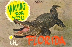 Let's just say that Florida tends to have a thing for alligators. Besides, I just hope this one devours Tim Tebow and not any random tourists.