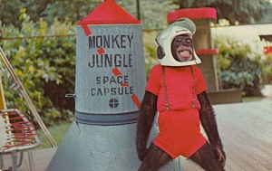 Of course, I'm not sure whether the space capsule would work in space or be approved by NASA. But chimp looks quite proud in his spacesuit.