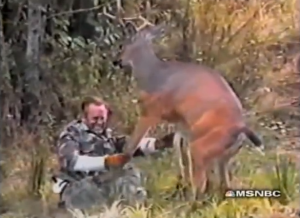 If you think that the most dangerous wild animals are predators, think again. Herbivores can be just as nasty. For instance, while deer are seen as the gentle giants of the forest, they're actually extremely dangerous, especially during rutting season. I call this picture Bambi's Revenge. Yes, he will pay dearly.